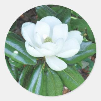 Magnificant Magnolia Classic Round Sticker