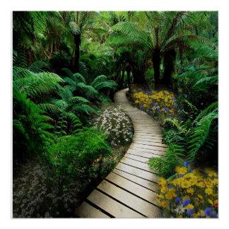 Magnificent Boardwalk Through A Fern Forest