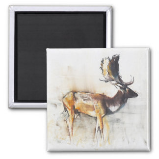 Magnificent Fallow Buck 2006 Square Magnet