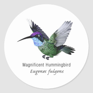 Magnificent Hummingbird with Name Classic Round Sticker