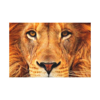 Magnificent Lion's Head Beautifully Regal Canvas Print