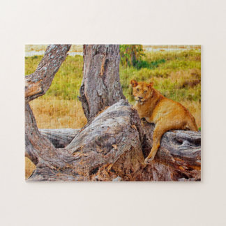 Magnificent Lions of South Africa Puzzle