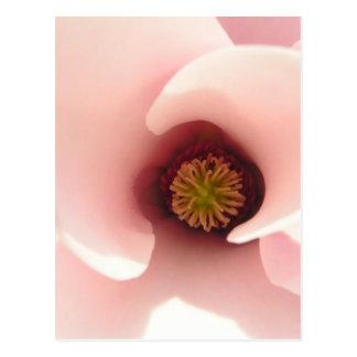 Magnificent Magnolia Postcard