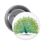 Magnificent Peacock Art Pinback Button