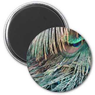 Magnificent Peacock  Feather Magnet