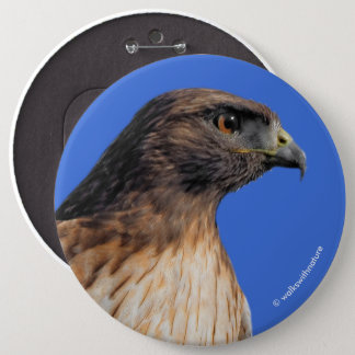 Magnificent Red-Tailed Hawk in the Sun 6 Cm Round Badge