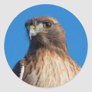 Magnificent Red-Tailed Hawk in the Sun Round Sticker