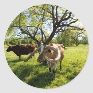 Magnificent Texas Longhorn Cattle Classic Round Sticker