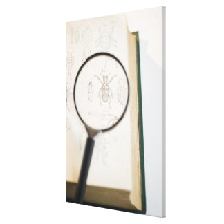 Magnifying glass over book showing insects stretched canvas prints