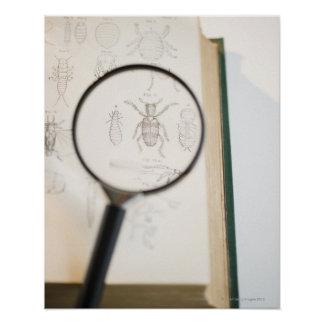 Magnifying glass over book showing insects posters
