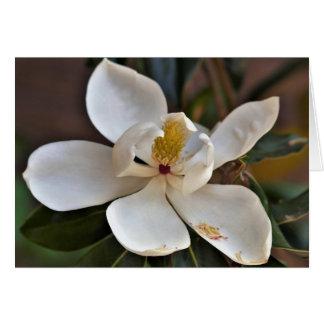 Magnolia Angel Card
