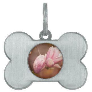 magnolia blooming  on tree pet tag