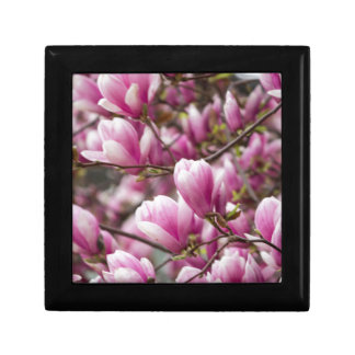 magnolia blooming  on tree small square gift box