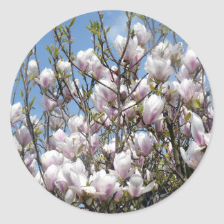 Magnolia Blooms In Spring Stickers