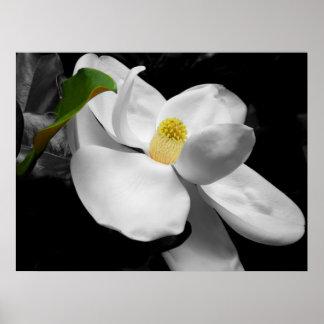 Magnolia Blossom Fine Art Print