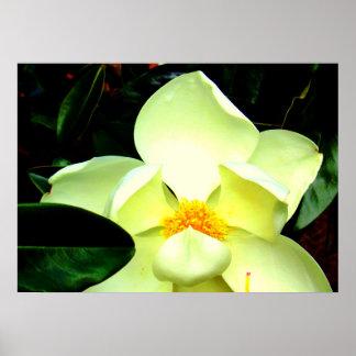 Magnolia Blossom Photo Poster