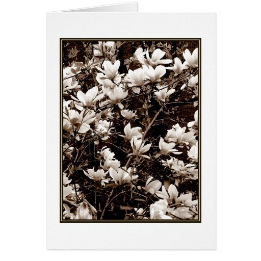 'Magnolia Blossoms' Blank Greeting Card