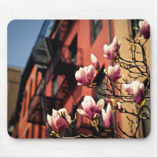 Magnolia Blossoms - New York City Mouse Pad
