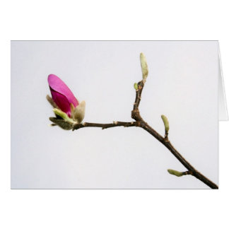 """magnolia bud"" by Larry Coressel Card"