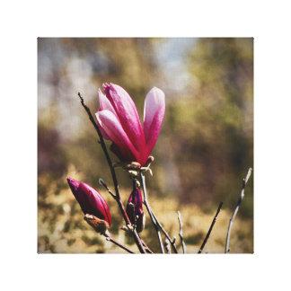 Magnolia Bud - Canvas Art - Pink Flower