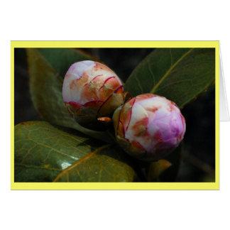 Magnolia Buds Card