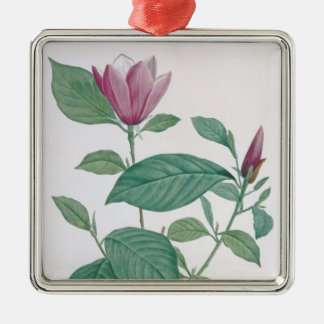 Magnolia discolor, engraved by Legrand (colour lit Christmas Ornament