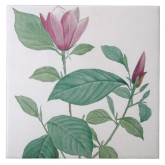 Magnolia discolor, engraved by Legrand (colour lit Tile