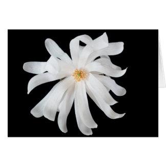 Magnolia Flower on Black Card