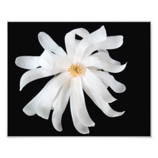 Magnolia Flower on Black Photo Print