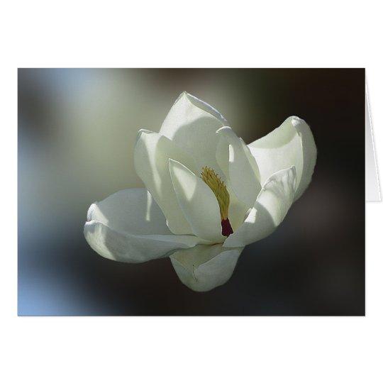 Magnolia Grandiflora Card