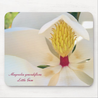Magnolia grandiflora 'Little Gem' Mouse Pads