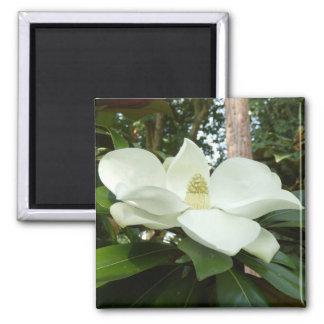 Magnolia Grandiflora Magnet