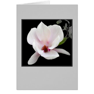 'Magnolia in Bloom' Blank Note Card