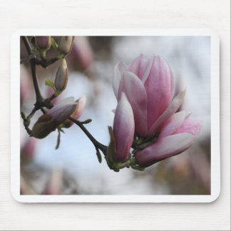 magnolia in bloom mouse mat