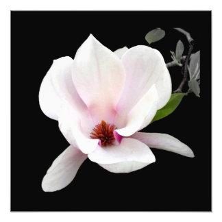 'Magnolia in Bloom' Photographic Print