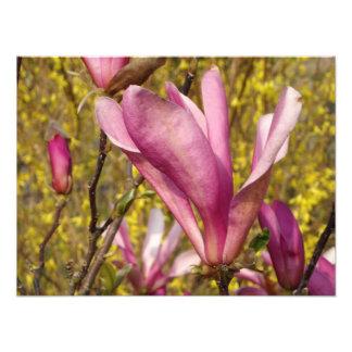 Magnolia in English Garden photo print