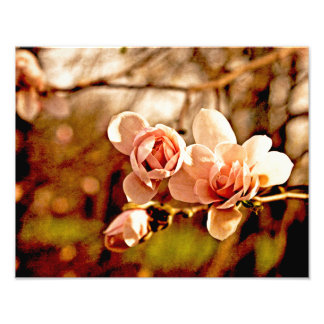 Magnolia Mood in Pink Photograph
