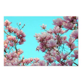 Magnolia Photo Print