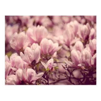 Magnolia Post Cards