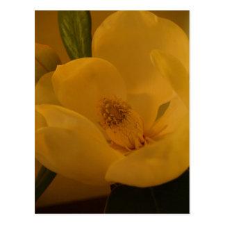 """Magnolia Sateen"" Postcard"