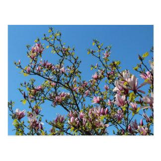 Magnolia sky postcard