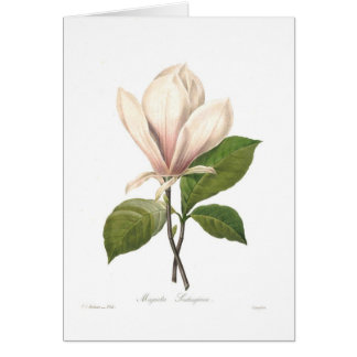 Magnolia soulangiana card