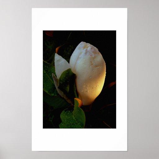 Magnolia Sunrise Posters
