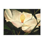 magnolia tree flower stretched canvas prints