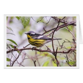 Magnolia Warbler Card