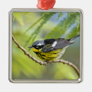 Magnolia Warbler Dendroica magnolia) adult, Silver-Colored Square Decoration