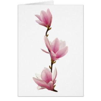 Magnolie Greeting Card