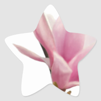 Magnolie Star Sticker