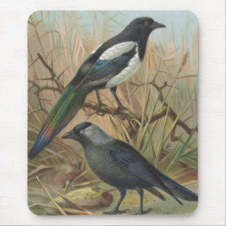 Magpie and Jackdaw Vintage Bird Illustration Mouse Pad