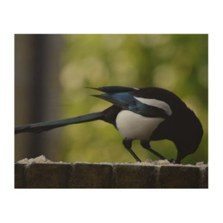 Magpie Wood Wall Art